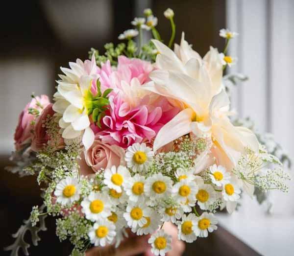 dahlias feverfew flowers