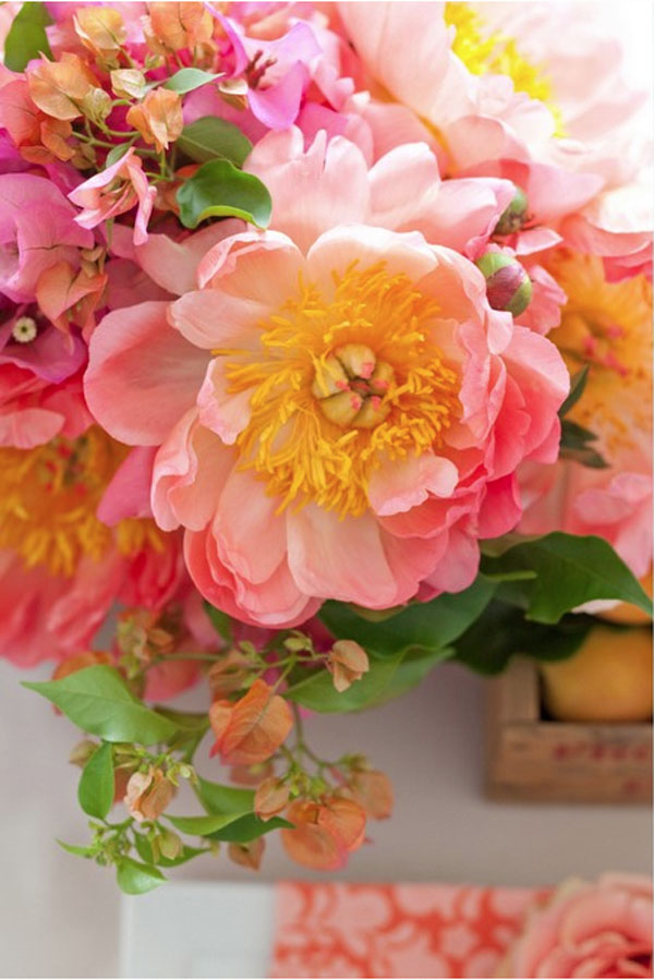 Stemz Floral Design, Coral Charm Peonies, Bougonvellia