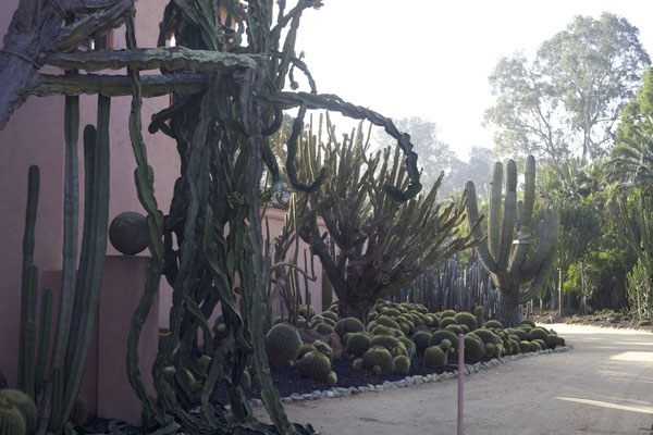 cactus garden at Lotusland
