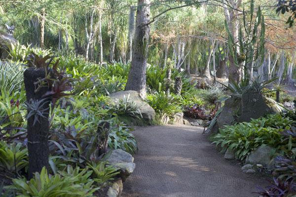 Lotusland Bromeliads gardens