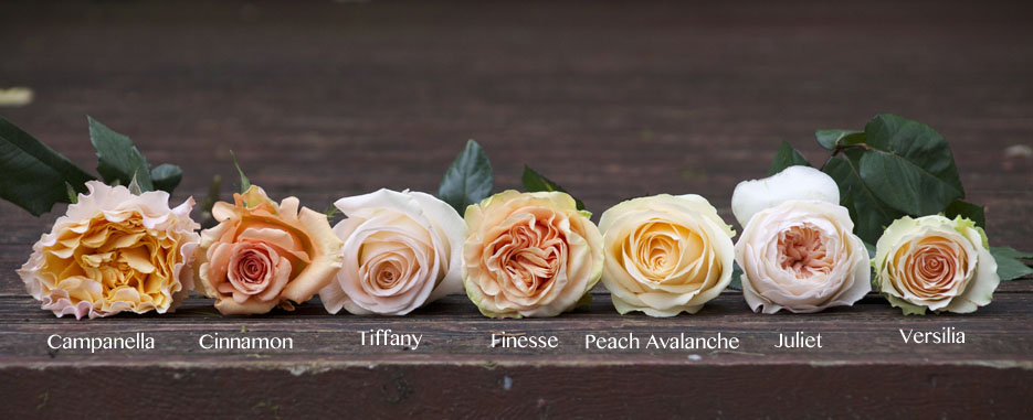 Flirty Fleurs Peach Rose Color Study, Versilia, Campanella, Cinnamon,  Juliet, Tiffany
