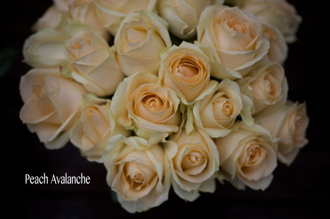 Flirty Fleurs, The Floral Blog, Peach Avalanche Rose Study