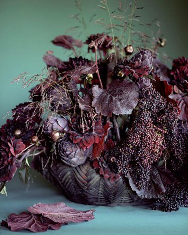 Martha Stewart, dark plum leaves and chocolate cosmos