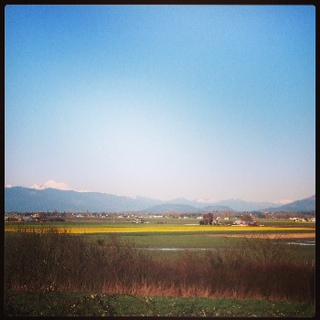 Skagit Valley Washington Daffodil Fields