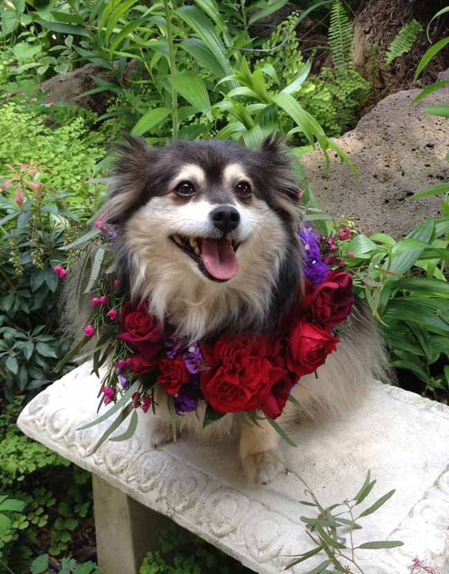 Fleurie Flowers, Oliver wearing a red and purple floral wreath