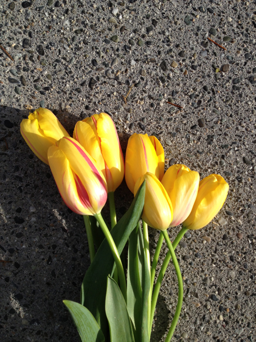 Flirty Fleurs - yellow tulips how-to care for tulips