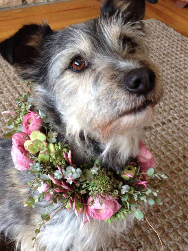 Twigs Floral Design, Chevy wearing a lovely pink and green floral wreath