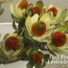 Resendiz Brothers Protea Growers