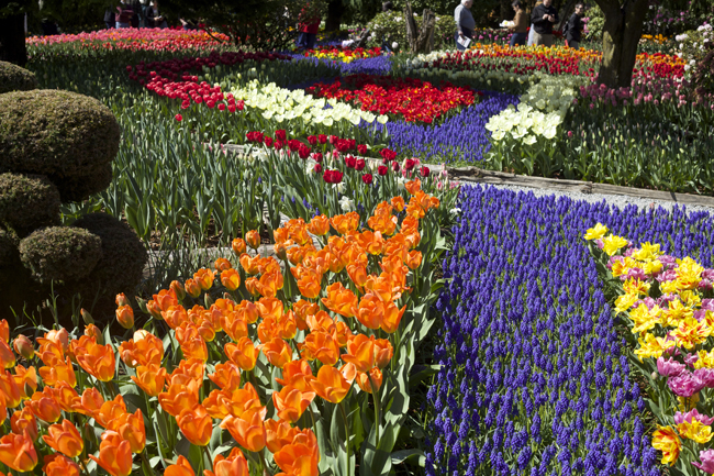 RoozenGaarde Display Garden of tulips, hyacinths and daffodils