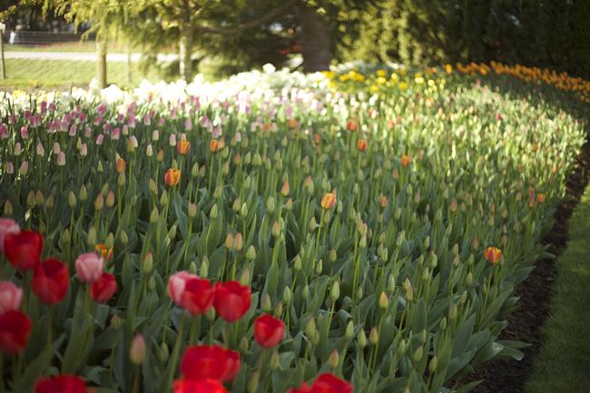 RoozenGaarde, Tulip Beds