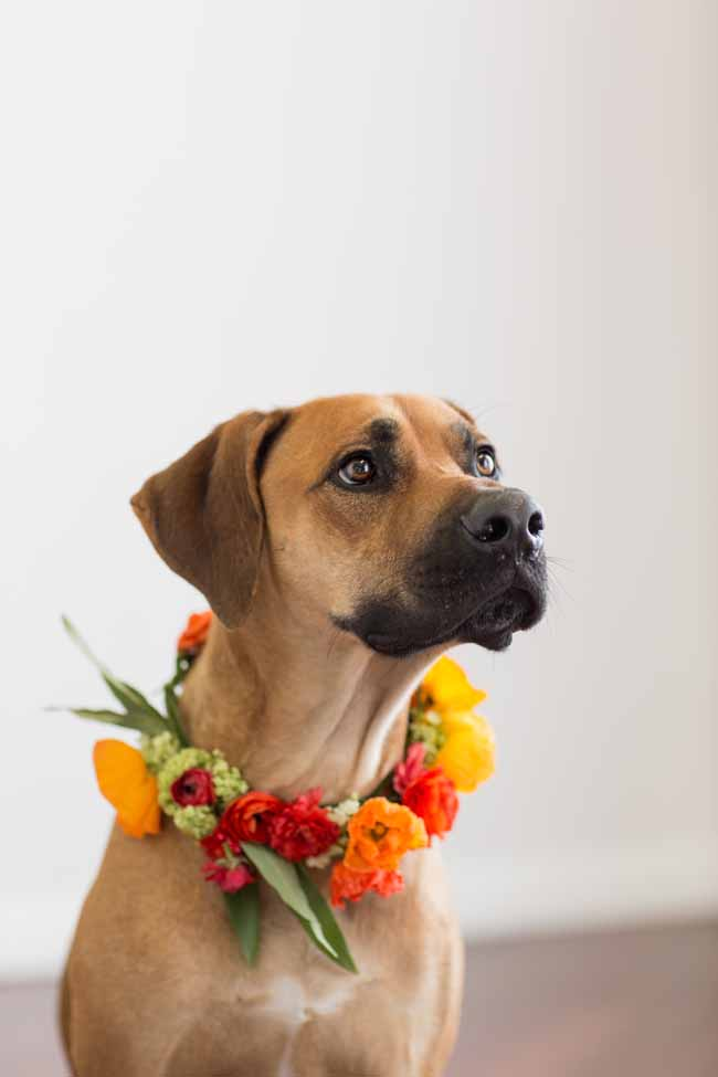Three Sisters Flowers & Events, Leo modeling a flower wreath of orange and yellow flowers