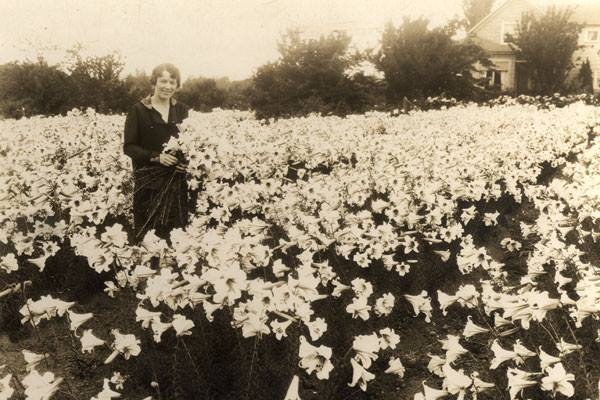 Swansons Land of Flowers, Washington State, 1924