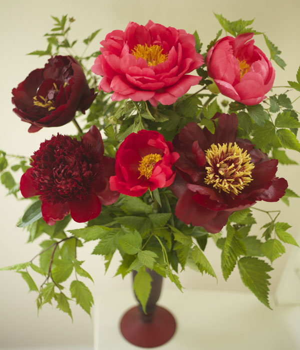 Jello Mold Farm Peonies - Red Charm, Buckeye Belle, Carina, Cytheria, Rasberry Charm
