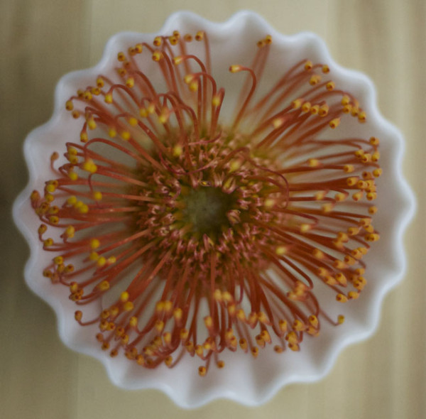 Flirty Fleurs - Orange Pincushion Proteas