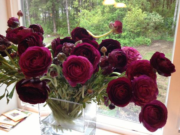 Florabundance Burgundy Ranunculus