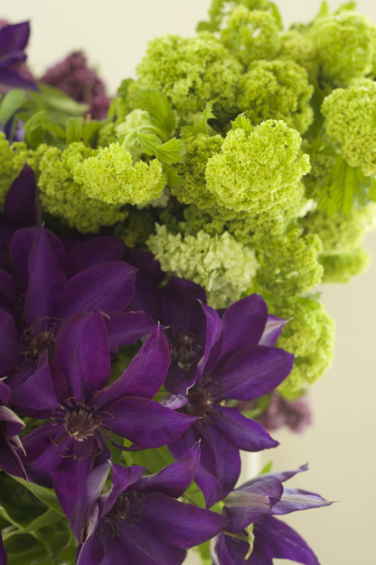 Florabundance Green Viburnum and Purple Clematis