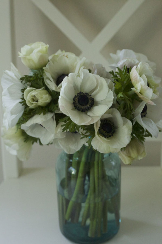 Florabundance Wholesale - Panda Anemones, Black and White Anemones