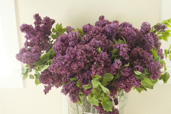 Florabundance Wholesale - Purple Lilacs
