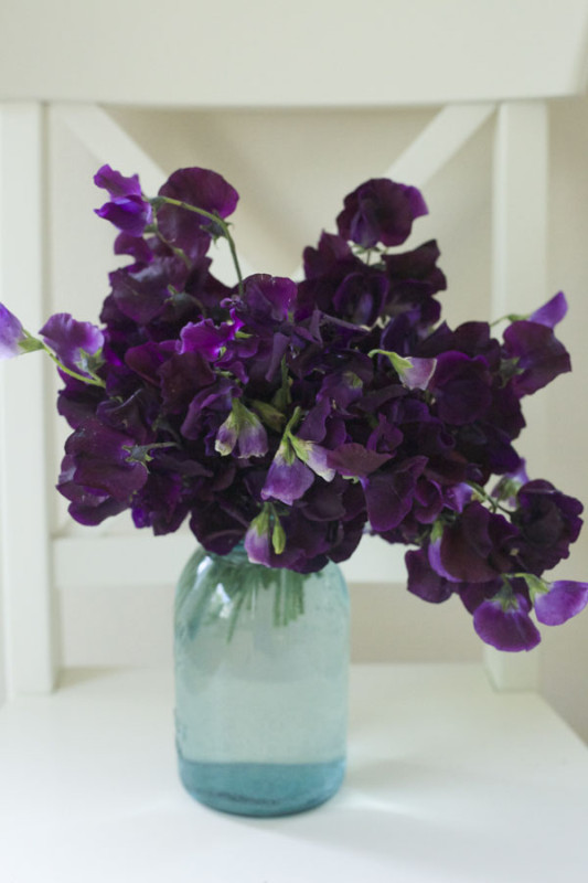 Florabundance, Purple Sweet Peas