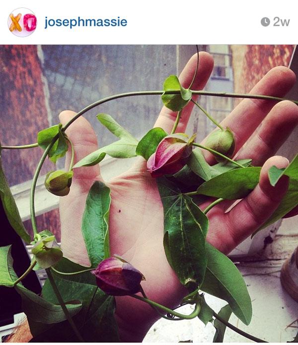 Joseph Massie on Instagram
