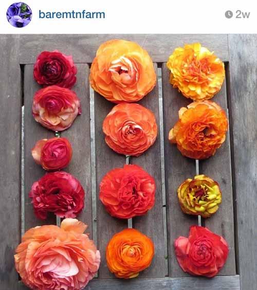 10 Flower Farms to follow on Instagram