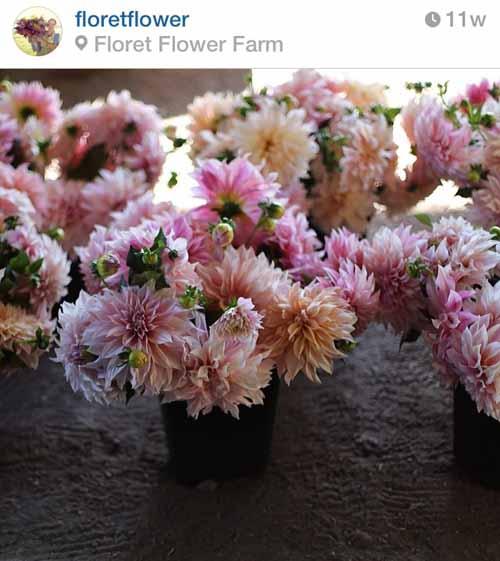 floret flower farm washington