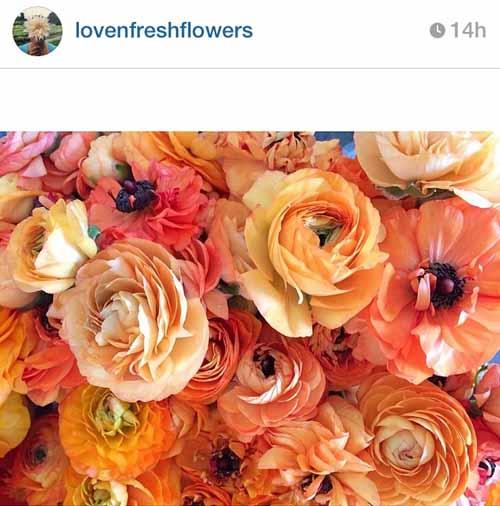 Love N Fresh Flower Farm