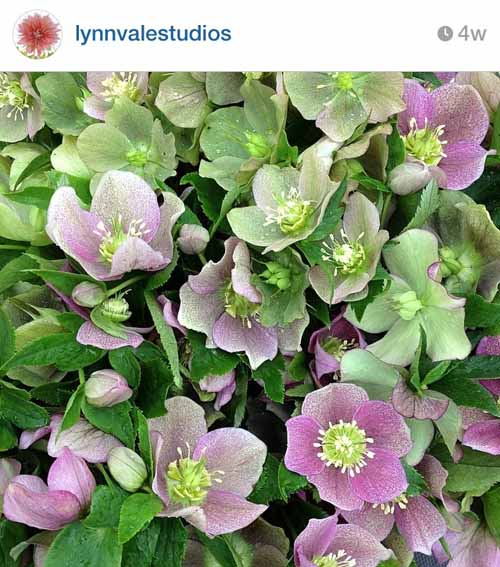 lynn vale studios vigrinia flower farm