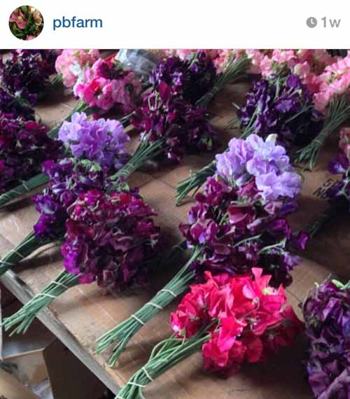 pierpont blossom farm on instagram