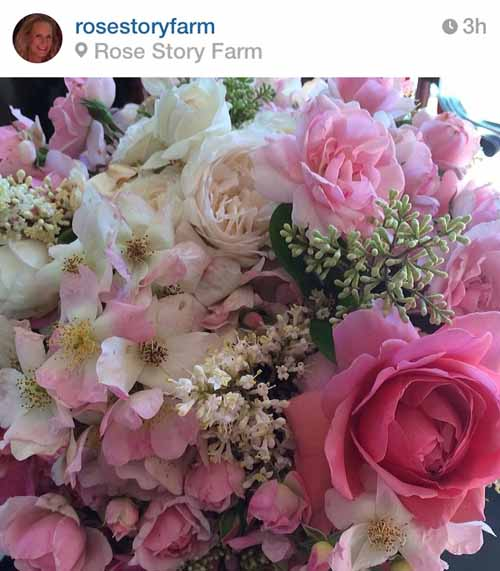 rose story farm santa barbara california