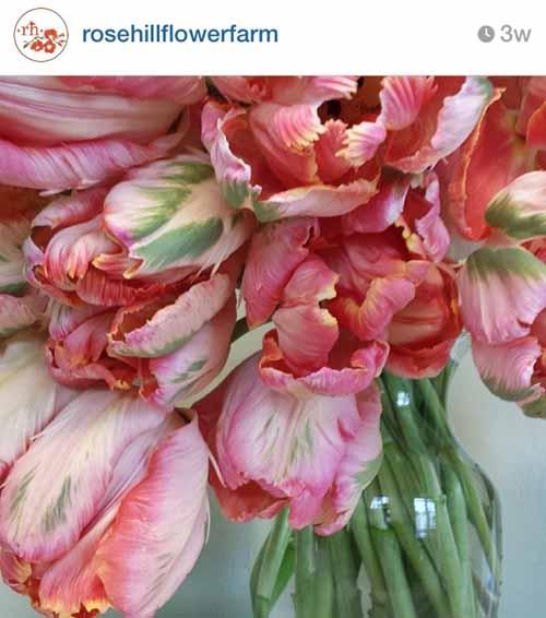 rose hill flower farm oregon