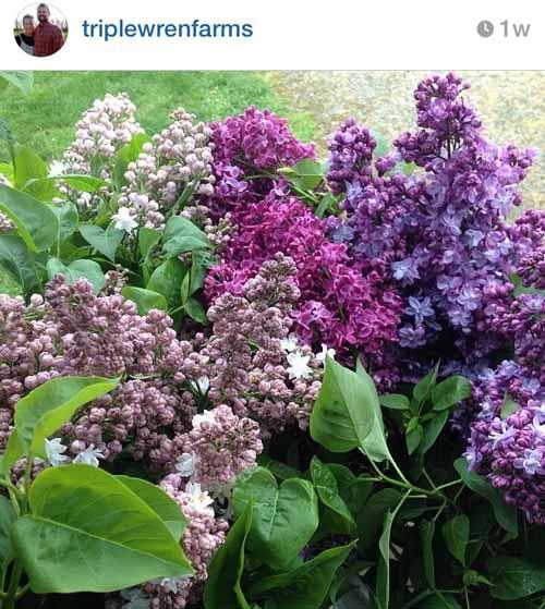 washington's triple wren flower farmers