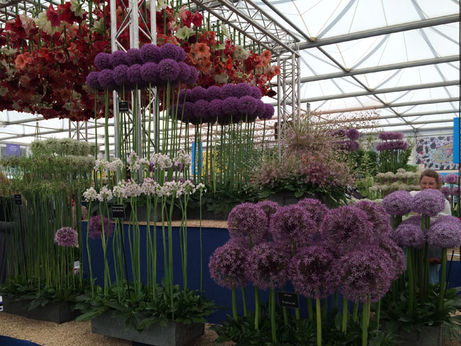 RHS Chelsea Flower Show - Allium & Amaryllis Display