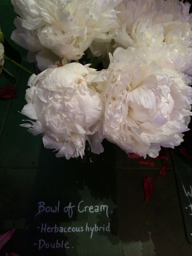 Neill Strain - Passion for Peonies - Bowl of Cream Peonies