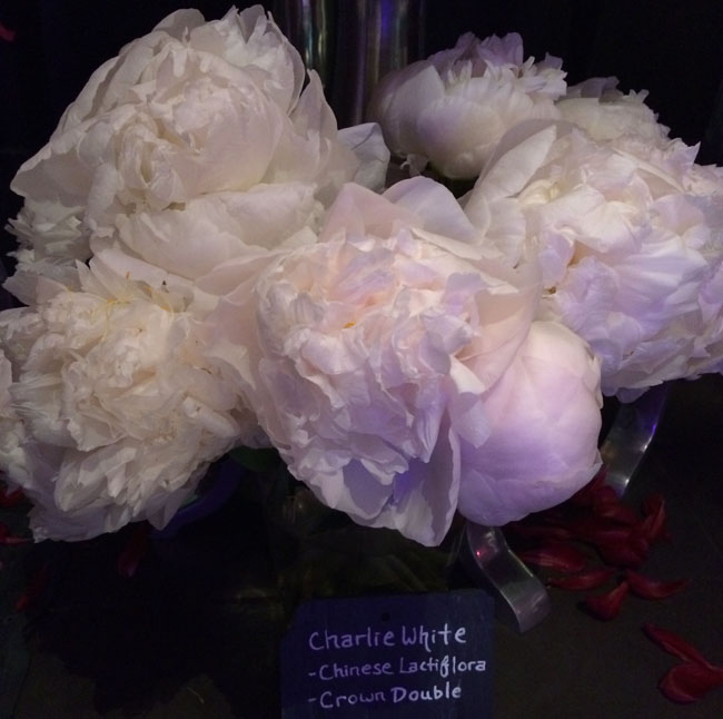 Neill Strain - Passion for Peonies - Charlie White Peonies