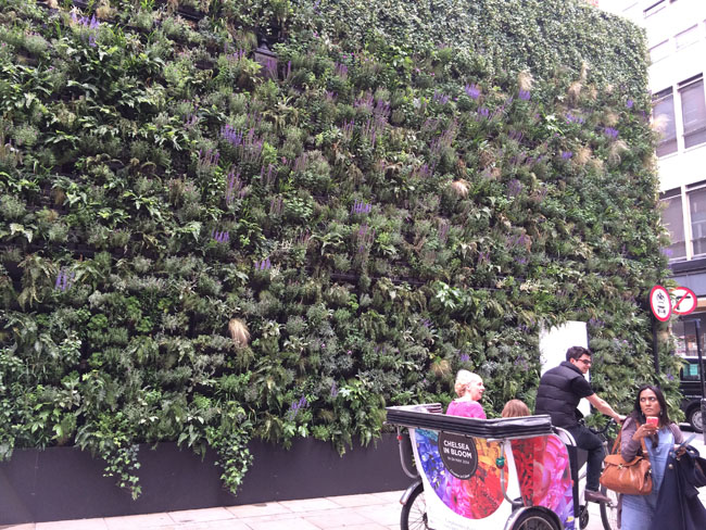 Chelsea In Bloom - wall of plants