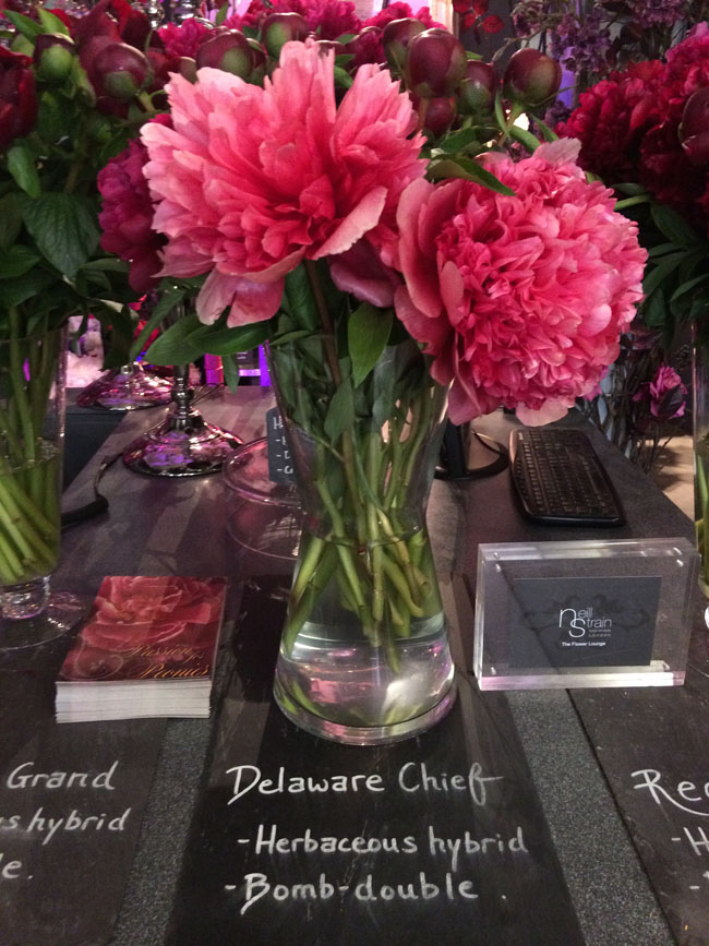 Neill Strain - Passion for Peonies - Delaware Chief Peonies
