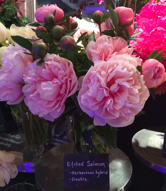 Neill Strain - Passion for Peonies - Etched Salmon