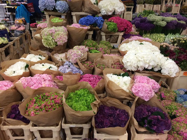 New Covent Garden Market, London - Hydrangeas