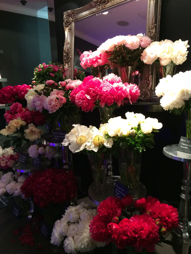 Neill Strain - Passion for Peonies Display
