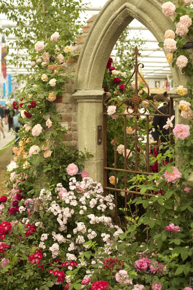 RHS Chelsea Flower Show - Roses on a Garden Gate