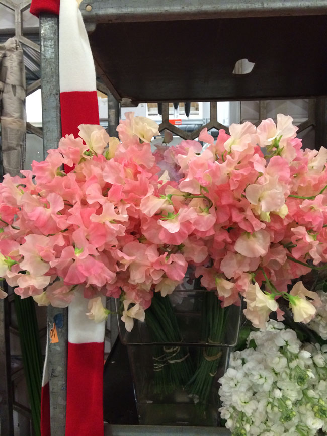 New Covent Garden Market, London - Sweet peas