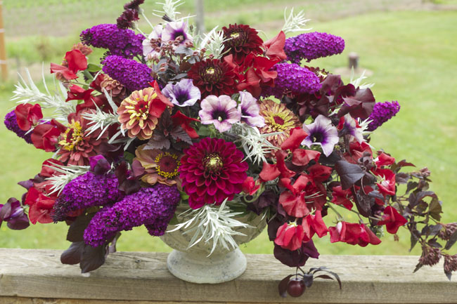 Bella Fiori visits Everday Flower Farm, Burgundy dahlias, zinnias, butterfly bush, nine bark, petunias
