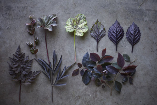 Black Foliages from Max Gill's Cutting Garden