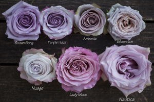 colors of purple roses