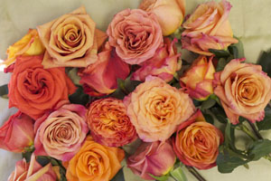 colors of orange roses