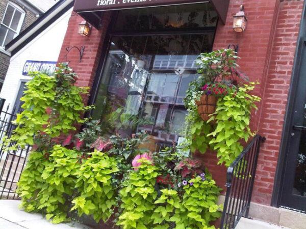 Pistil and Vine Flower Shop