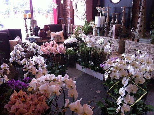 The Empty Vase Flower Shop