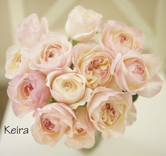 florabundance david austin keira garden rose a lovely pale pink garden rose blush and ivory bridal bouquet - Blush Garden Rose Bouquet