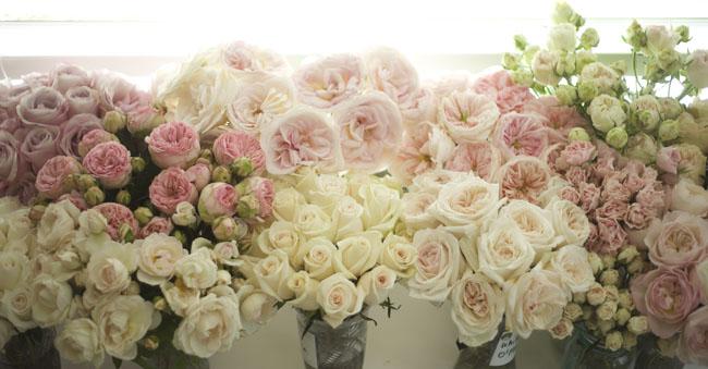 Flirty Fleurs Pink Rose Study